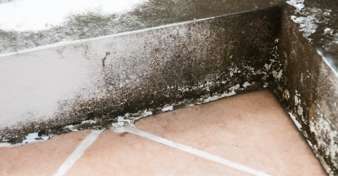 Mold growing on basement walls