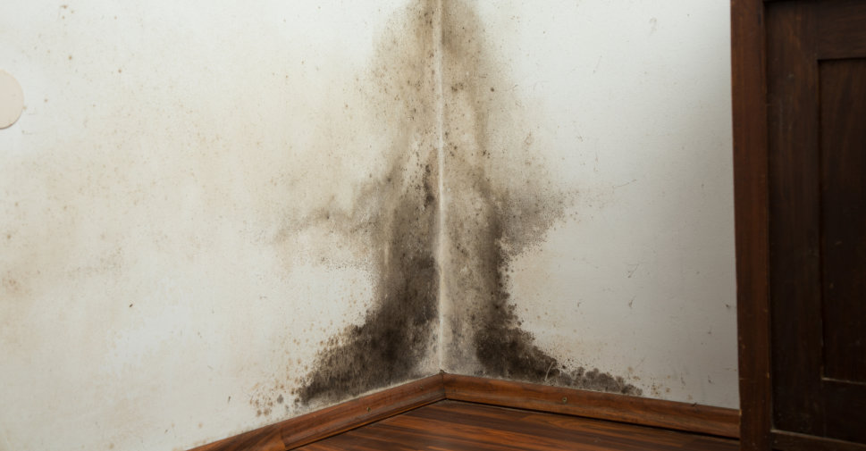 Does Bleach Kill Mold?
