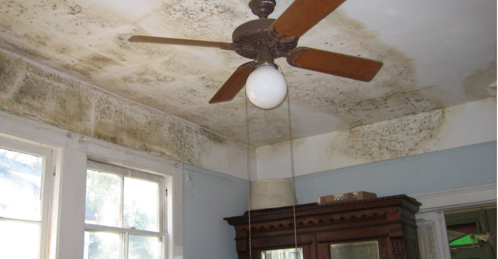 Don't Use Chemicals to Remediate Mold