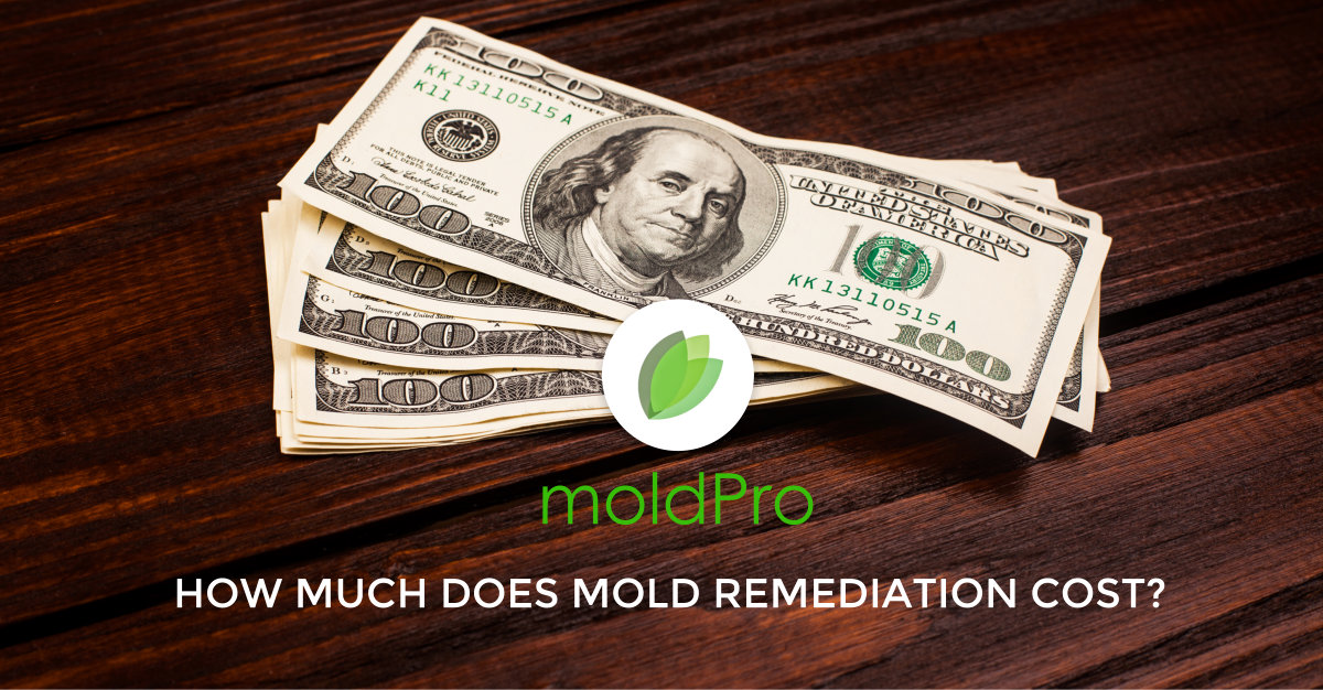 How much does mold remediation cost?