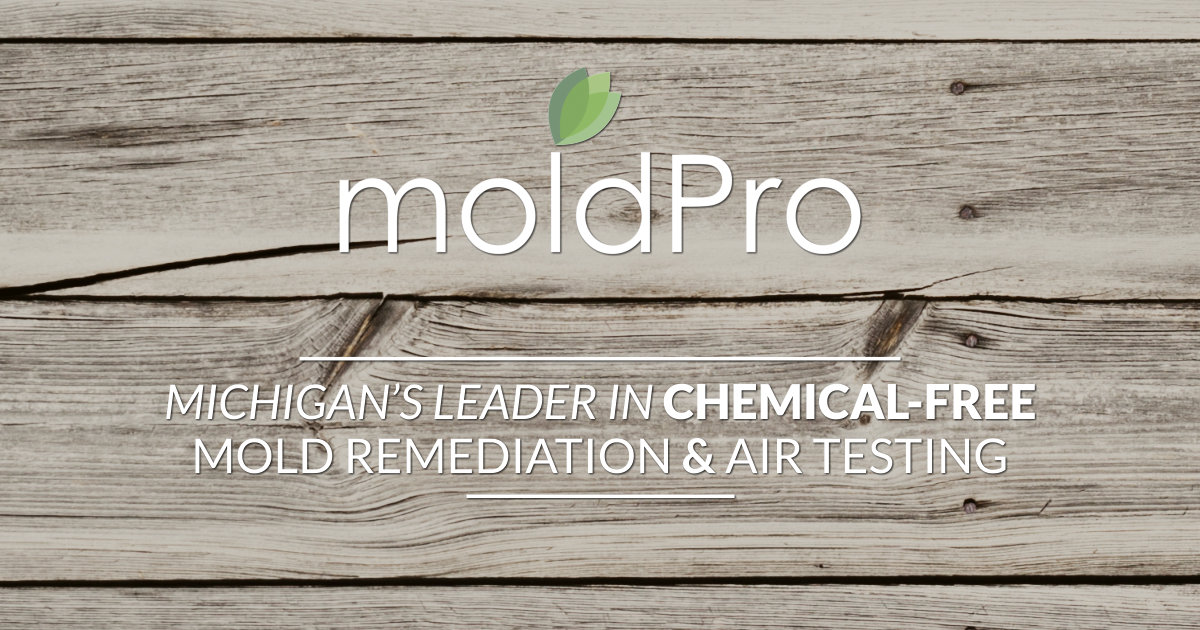 Mold Pro, The Premium Brand in Mold Remediation