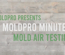 MoldPro Minute: What Is Mold Spore Air Testing?