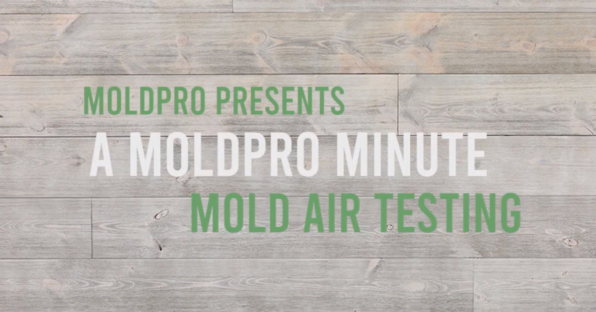 MoldPro Minute: Mold Ait Testing